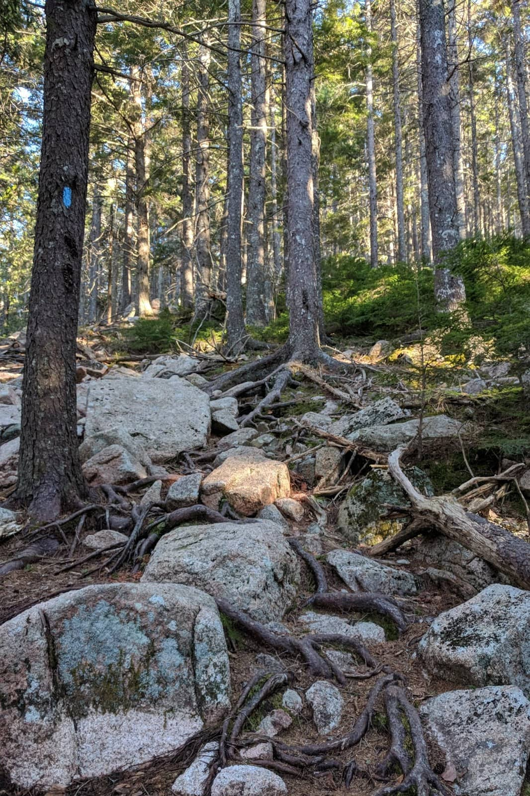 pemetic north ridge trail
