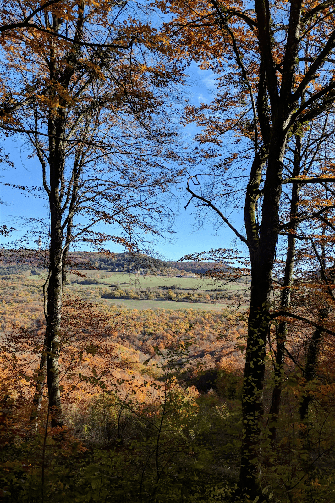 changing leaves in Burgundy