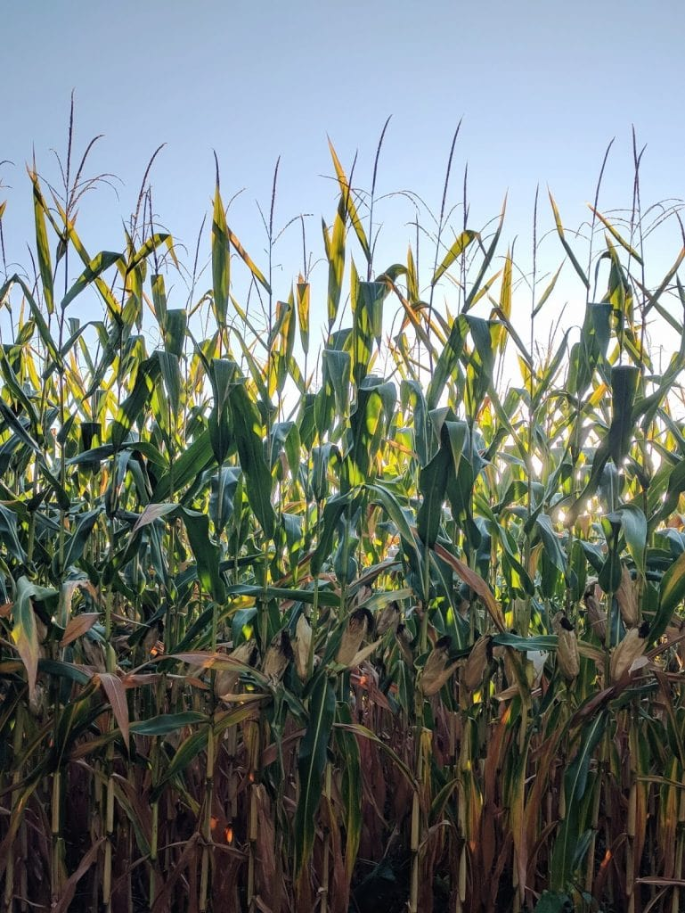 great brooks state farm