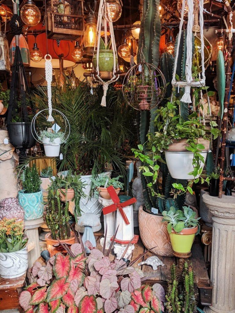 mark your spot interior with abundant hanging plants