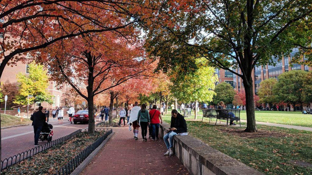 pretty fall leaves columbus downtown