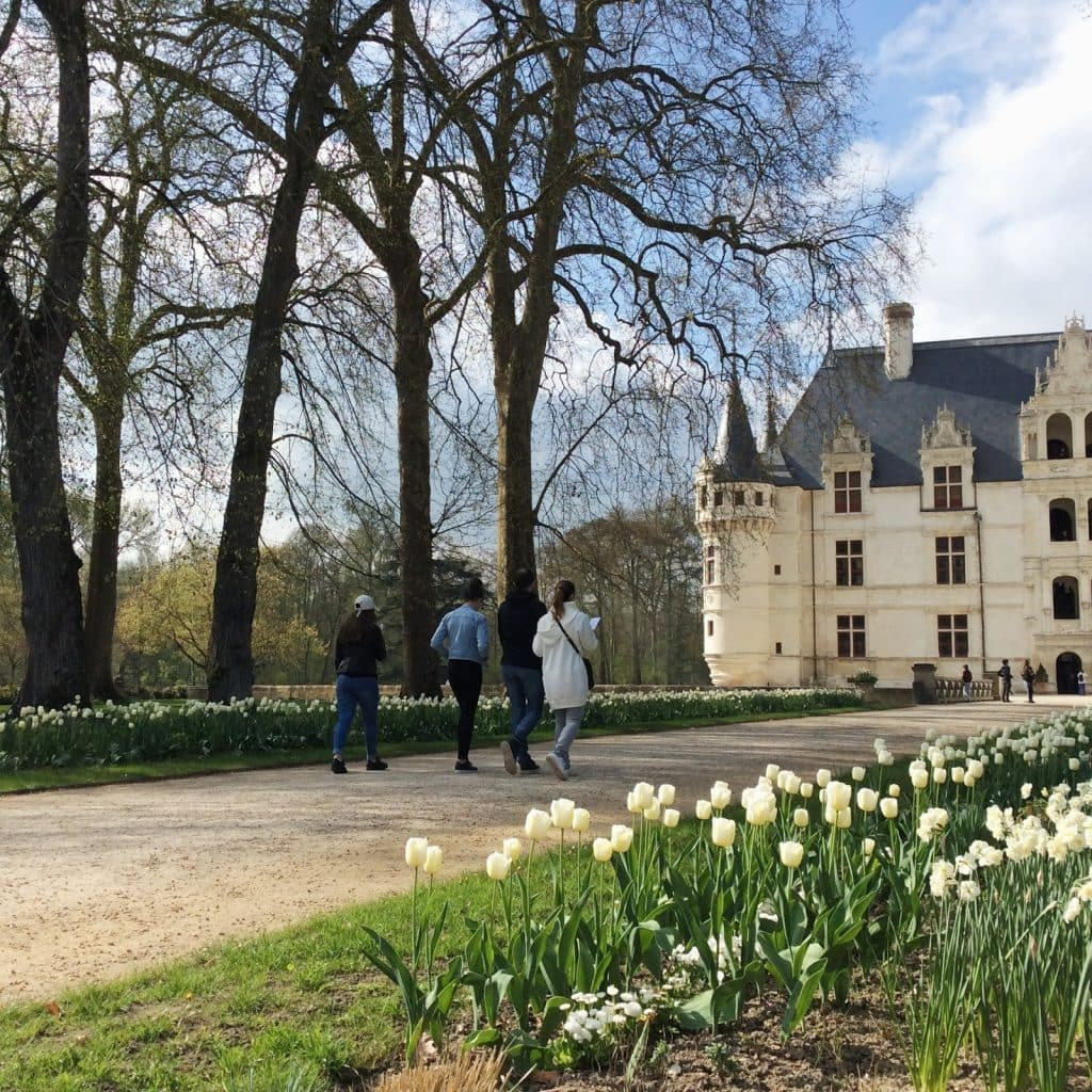 Château d'Azay-le-Rideau in the spring, with white tulips covering the grounds