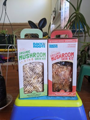 the pink oyster mushroom kit and regular kit from Back to the Roots