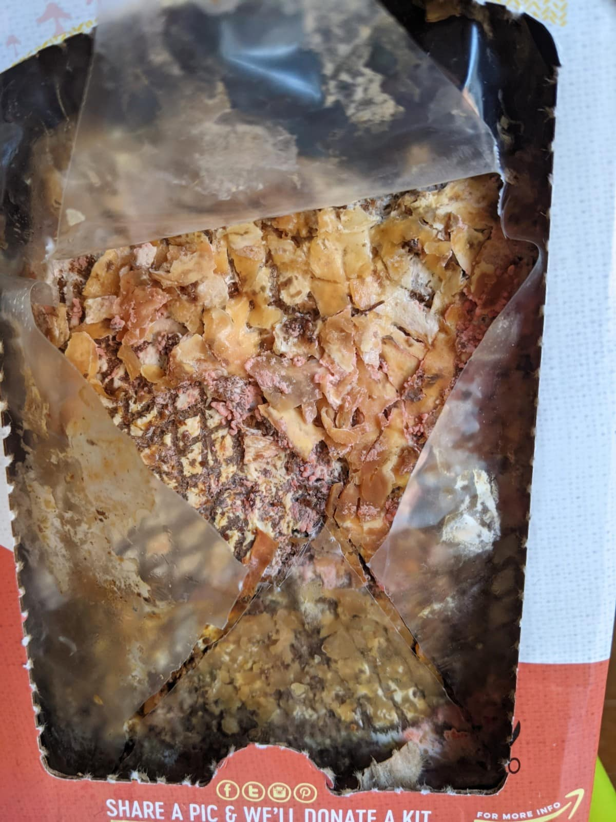 Day 1 of the Back to the Roots pink oyster mushroom kit, with tiny pink dots that look like mold